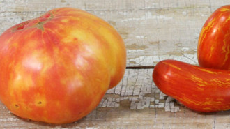 heirloom_tomato-striped-750
