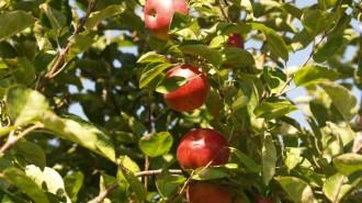 Apple Picking Westchester