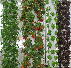 Summer Survival Start your own aeroponic deck farm What To Do