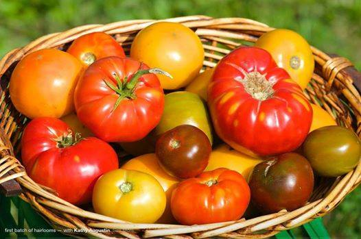 Augustine's Farm Stand in Greenwich Heirloom Tomatoes