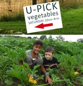 Hilltop Hanover Farm U-Pick
