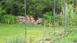 coyote_backyard_gardens