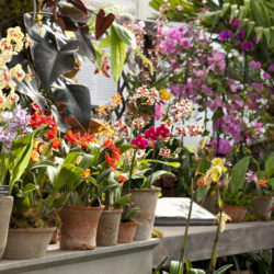 events_nybg_orchid-show 35 (Mostly) Local Winter Events 2017
