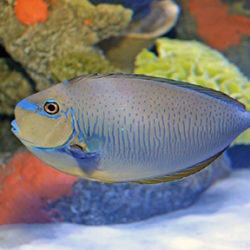 Kids_aquarium_coralreef