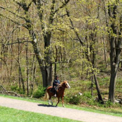 rockpark_joegolden_horseandrideronpocanticorivertrail
