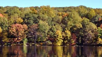 Swan Lake at Rockefeller State Park Preserve