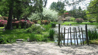 The setting for Nisa Lee's Mother's Day Brunch at the Hammond Museum & Japanese Stroll Garden