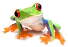 lasdon_frog  Bucket List: Glass House Conservatory at Lasdon Park & Arboretum