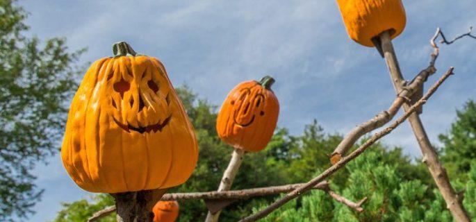 halloween_nybg_scarecrows pumpkins 2 - Where To Celebrate Halloween