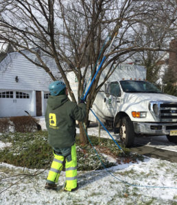 Winter Care for Your Trees